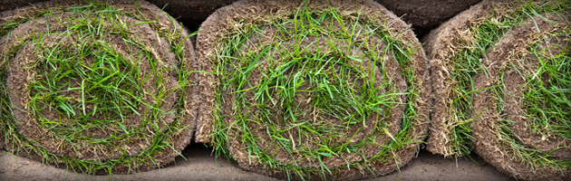 turf for laying